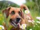 Jak szybko usunąć kleszcza u psa