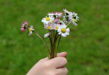 Jakie kwiatki można podlać wodą z czosnkiem